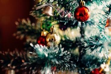 Prawdziwa choinka bożonarodzeniowa